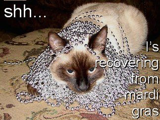 Image result for cat mardi gras meme