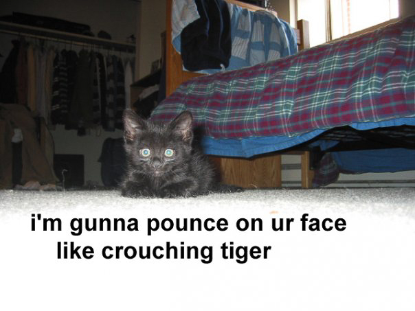cat - crouching tiger-9.jpg