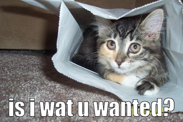 cat - is i what you wanted-11.jpg