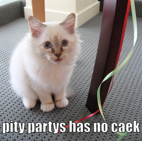 cat - pity party has no cake-15.jpg