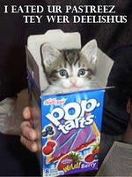 cat - eated pop tarts-8.jpg