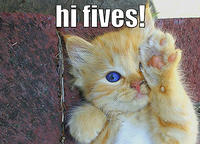 cat - hi fives-13.jpg