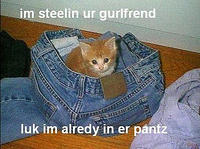 cat - in girlfriends pants-20.jpg