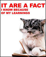 cat - it are fact-6.jpg