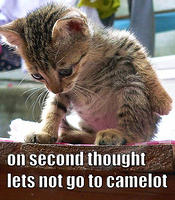 cat - lets not go to camelot-19.jpg