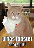 cat - share lobster plz-12.jpg