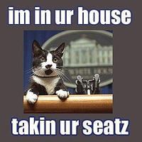 cat - taking your seats-7.jpg